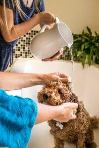 pet-shampoo-how-to-use